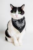Zwart-witte kat met zwarte sjaal Stock Afbeeldingen