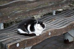 Zwart-witte kat op de bank in Riga stock foto