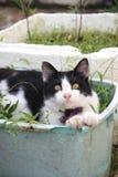 Zwart-witte kattenzitting in de installatiemand Royalty-vrije Stock Afbeeldingen