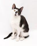 Zwart-witte kattenzitting, stokvoering zijn hoofd droevig stock afbeelding
