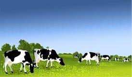 Zwart-witte koeien vector illustratie