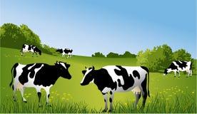 Zwart-witte koeien stock illustratie
