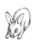 Zwart-witte konijnillustratie Stock Foto
