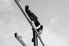 Zwart-witte kraaien Stock Afbeeldingen