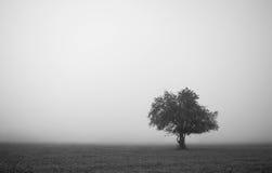 Zwart-witte landschapsminimalism Stock Afbeeldingen