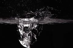 Zwart-witte menselijke schedel Stock Afbeeldingen
