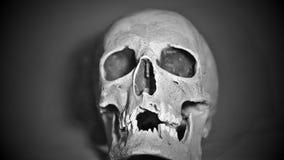 Zwart-witte menselijke schedel op een grijze achtergrond Halloween stock videobeelden