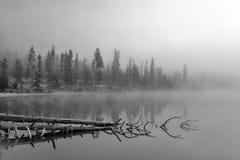 Zwart-witte mist op een meer met een boombezinning Stock Foto