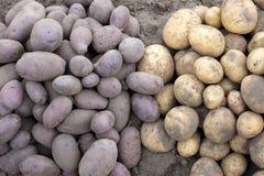 Zwart-witte ongewassen aardappels ter plaatse stock foto's