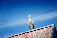 Zwart-witte ooievaars op een dak, blauwe hemelachtergrond Stock Fotografie