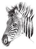 Zwart-witte schets van een jong Zebra's-gezicht vector illustratie