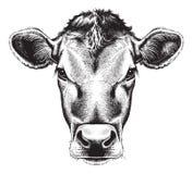 Zwart-witte schets van het gezicht van een koe vector illustratie