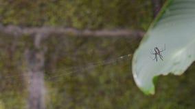 Zwart-witte spin stock videobeelden