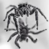 Zwart-witte spin op spiegel Royalty-vrije Stock Afbeelding