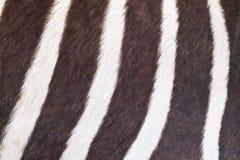 Zwart-witte textuur van gestreepte huid Stock Foto
