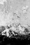 Zwart-witte textuurachtergrond van de oude paddestoelmuur, Stock Afbeelding
