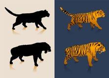 Zwart-witte tijgersilhouetten en kleurenbeelden Stock Foto's