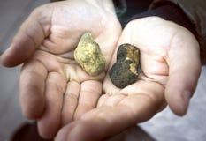 Zwart-witte truffels Het beeld van de kleur Stock Foto's