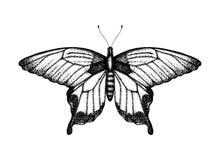 Zwart-witte vectorillustratie van een vlinder stock illustratie