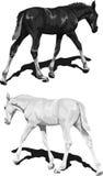 Zwart-witte veulennen met schaduwen Royalty-vrije Stock Foto