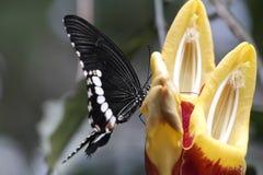 Zwart-witte vlinder royalty-vrije stock foto's