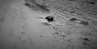 Zwart-witte voetstappen op het strand stock foto