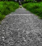 Zwart-witte weg en groen gras Royalty-vrije Stock Foto