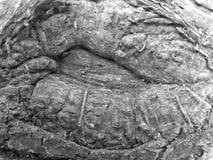 Zwart-witte Wortelhuid stock afbeelding