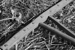 Zwart-witte zeldzame hark Stock Fotografie