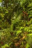 Zwarta roślinność w Bardia parku narodowym, Nepal Fotografia Stock