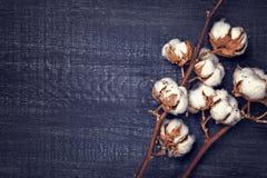 Zwarte achtergrond met katoenen bloem Royalty-vrije Stock Fotografie