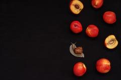 Zwarte achtergrond met rode nectarines en een grote slak Stock Foto's