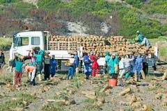 Zwarte bedrijfsmedewerkers die aardappels oogsten en op vrachtwagen in Cape Town, Zuid-Afrika laden Royalty-vrije Stock Afbeelding