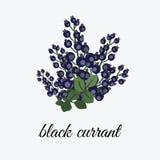 Zwarte bes op een tak Royalty-vrije Stock Foto
