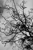 Zwarte Bladeren en Boom Stock Foto's