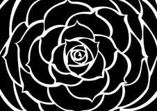 Zwarte bloem Stock Foto