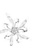 Zwarte bloem op witte achtergrond royalty-vrije illustratie