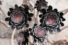 Zwarte Bloemen Royalty-vrije Stock Fotografie