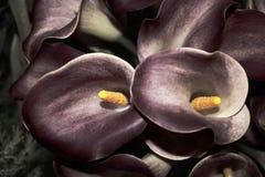 Zwarte bloemen Royalty-vrije Stock Afbeeldingen