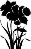 Zwarte bloemgele narcis Royalty-vrije Stock Foto's