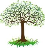 Zwarte boom Stock Afbeelding
