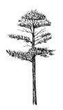 Zwarte boom Stock Fotografie