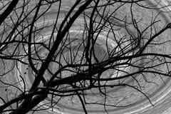 Zwarte boom en spiraalvormige achtergrond stock illustratie