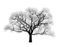 Zwarte boom Stock Afbeeldingen