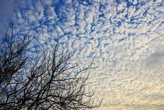 Zwarte boomtakken tegen de hemel en de wolken Stock Foto