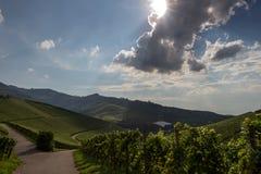 Zwarte bos backlit wijngaarden Stock Afbeeldingen