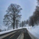 Zwarte bos de winteraandrijving door dalende sneeuw stock afbeeldingen