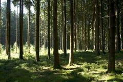 Zwarte Bosbomen Royalty-vrije Stock Foto's