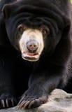 Zwarte bruine biergang stock fotografie