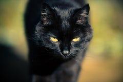 Zwarte Cat Approaching royalty-vrije stock foto